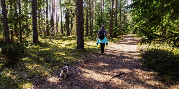 Women walking through forest with dog
