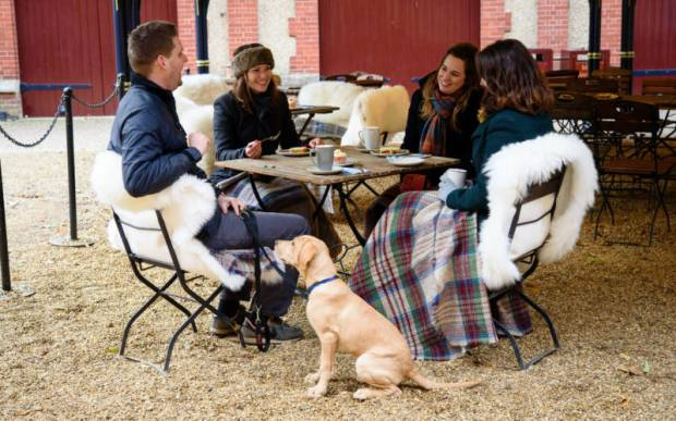 dog and their owners enjoying drinks at the stables