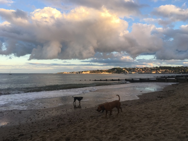Dogs enjoying Swanage beach in the evening