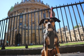 Dog and the Radcliffe Camera, Oxford