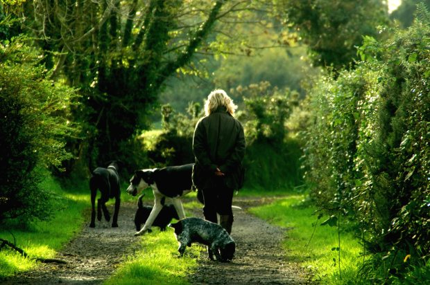 Dog walker with 4 dogs