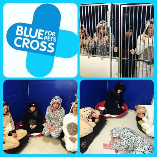 Blue Cross Lewknor Team Challenge