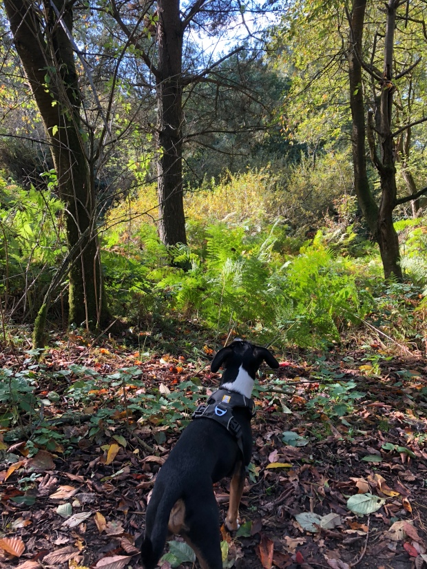 Squirrel hunting in Shotover County Park