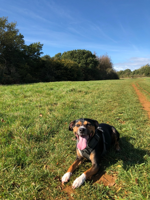 Dog lying on Shotover Plain
