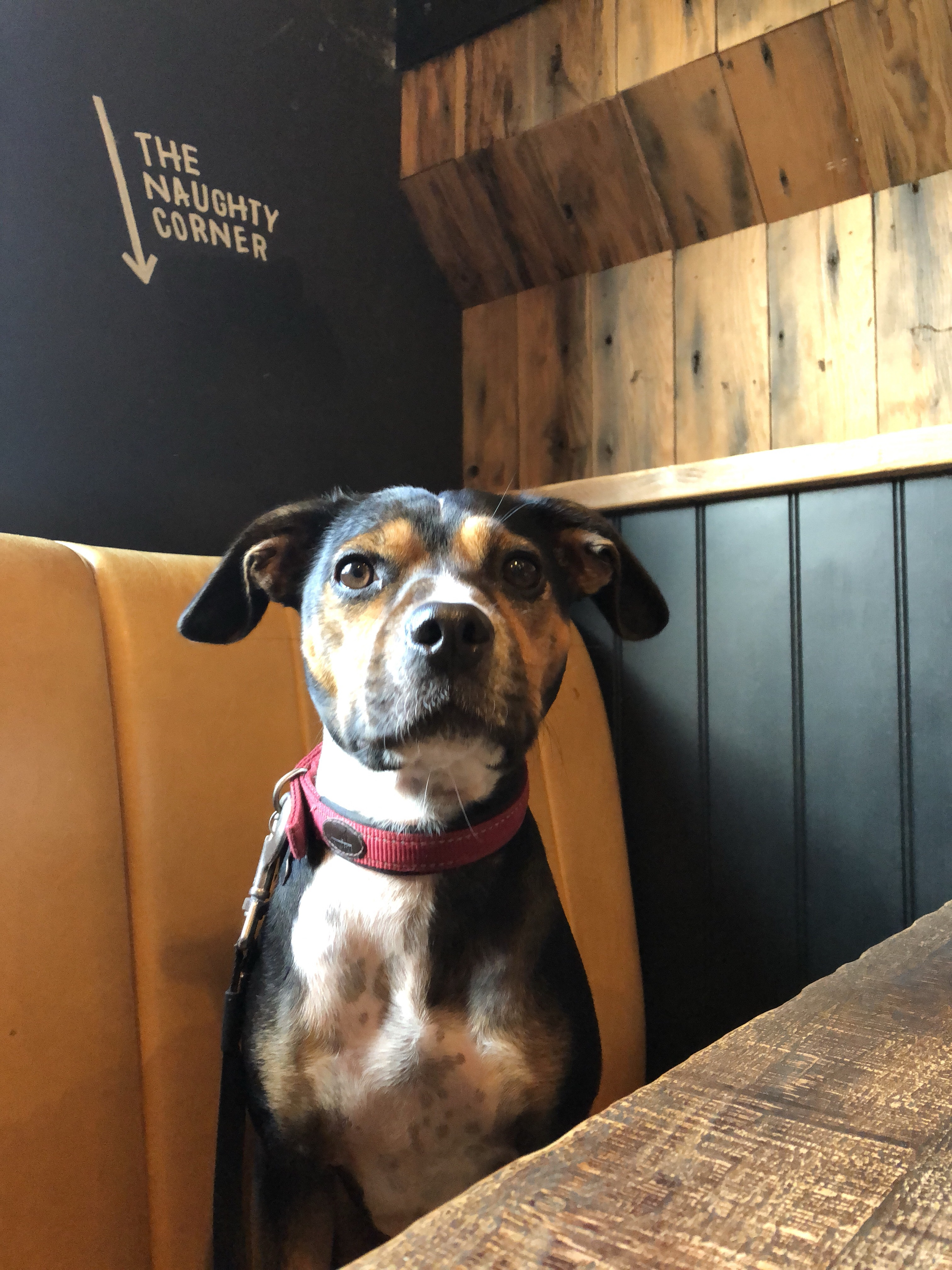 Dog in pub at The Rickety Press