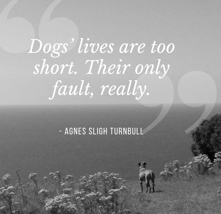 Dog loss quote with dog image