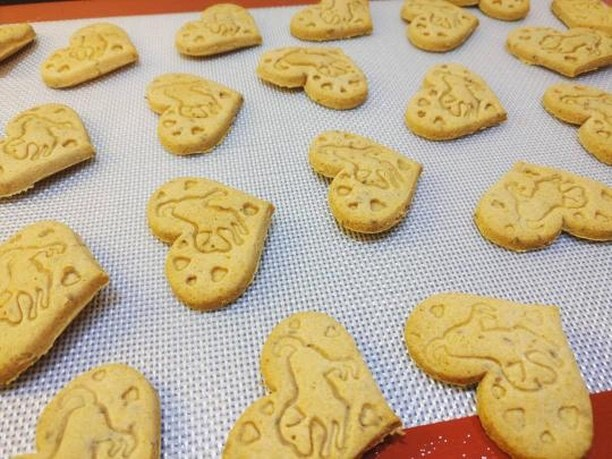 dog biscuits fresh from the oven