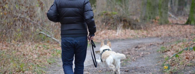 Man walking dog through forest
