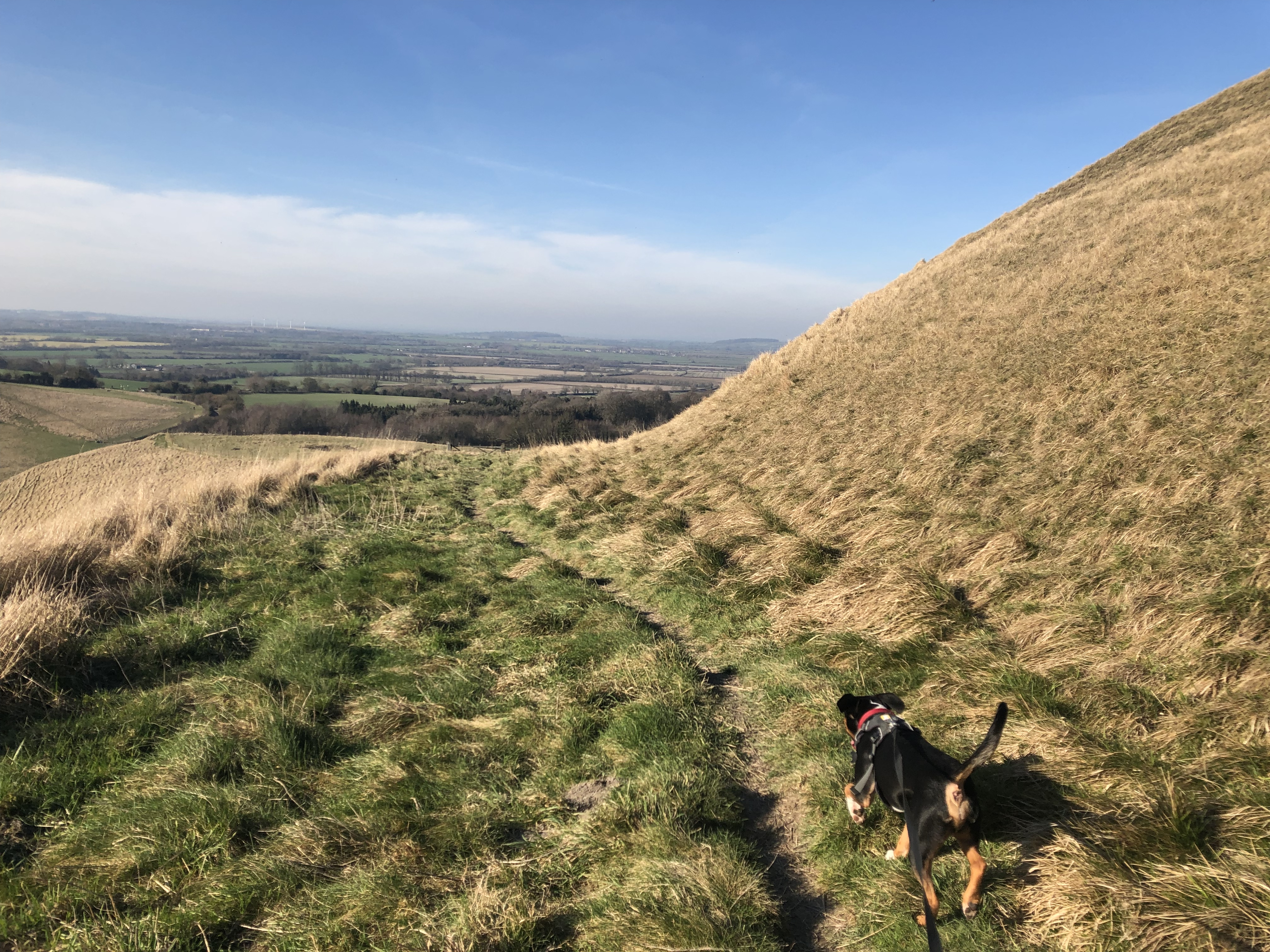 Dog climbing up hill Oxfordshire